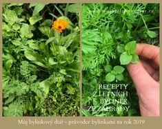 Parsley, Herbs, Herb, Spice