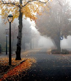 A foggy fall morning, Alice van der Plas. Autumn Morning, Autumn Day, Autumn Leaves, Beautiful Places, Beautiful Pictures, Beautiful Flowers, Seasons Of The Year, Happy Fall, Fall Season