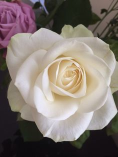 White Roses- check out @Amber Felce Pinterest now!
