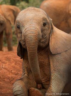 ~~Young Elephant by Karen R. Schuenemann~~