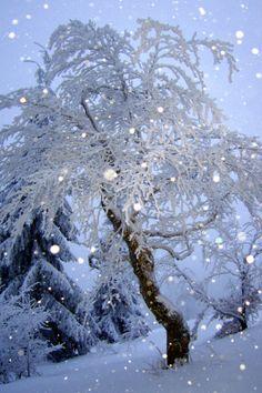 by photographer Daniel Waclawek > / Nature / Winter #danielwaclawek.com