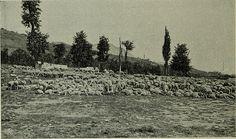 """A lot of sheep. Image from page 63 of """"L'arbre, la forêt et les pâturages de montagne; manuel de l'arbre pour l'enseignement sylvo-pastoral dans les écoles""""..."""