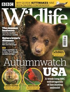 Magazines and Newspapers Animals And Pets, Cute Animals, Coal Tit, Animal Magazines, Award Winning Photography, Latest Discoveries, Wildlife Nature, Environmental Issues, Digital Magazine