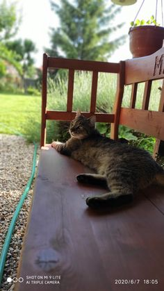 Garden Bridge, Outdoor Structures, Cats, Animals, Gatos, Animais, Animales, Animaux, Animal
