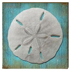 Sand Dollar Art printed on rustic pine boards