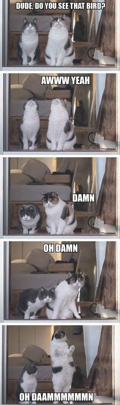 This would definitely be my cats watching out the back door together