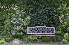 rhododendron rosling - Sök på Google