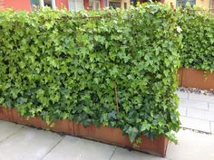 Landscape Gardeners Are Like Outside Decorators!