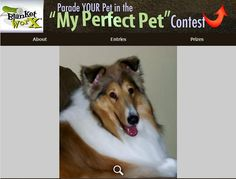 """""""My Princess Lexi - She is a wonderful companion."""" - Share your pet's photo for a chance to win a chance to win one of 7 beautiful photo gifts!  Submit their photo here http://www.myperfectpetcontest.com  and for more great ways to showcase your photo memories visit BlanketWorx"""