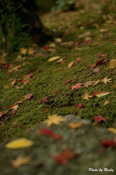 Chofu Garden, Yamaguchi, Japan: photo by Risky