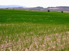 La estepa subtropical aparece en lugares como Sicilia (Italia) o Almería (España), mientras que la región pampeana argentina y la pampa magallánica chilena presentan particularidades similares a este bioma.