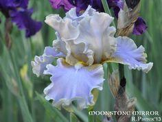 "Iris ""Moonstone Mirror"""