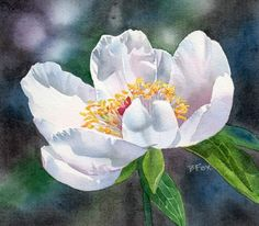 """KISSED BY THE SUN (I wish I was...) watercolor flower peony painting"" original fine art by Barbara Fox"
