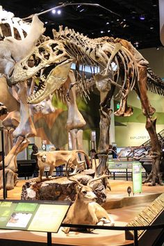 Tyrannosaurus, Perot Museum of Nature and Science, Dallas, TX