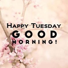 Happy Tuesday Good Morning                                                                                                                                                                                 More