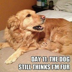 that is funny!! i bet the cat likes that!!