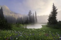 """""""Fairytale"""", Wildflowers near Lower Tipsoo Lake as dawn breaks over the crest of the Cascade Mountains of Washington as the first light hits Yakima Peak by Nagesh Mahadev on 500px"""