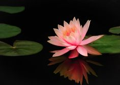 Water lily by lao chen #Nature #NaturePhotography #Photography #Photo #Picture