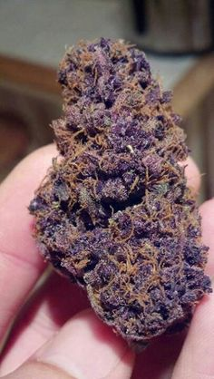 Purple heaven