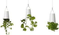 Sky Ceramic Mini Planter Set of 3 by Boskke at Lumens.com