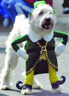 Dogs in Costumes. Why do people do this to their pets?