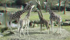 https://flic.kr/p/Sn6ayy | Blijdorp Zoo Rotterdam 3D | anaglyph stereo red/cyan