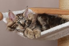 10 Tipps für eine katzengerechte Wohnung