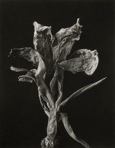 Flor, 1994
