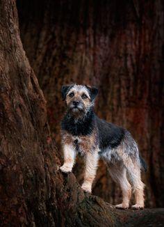 Dog Photography - Dog Photographer, Ayrshire, Edinburgh dog photography, Glasgow, cat photographer