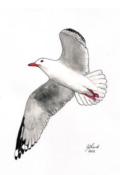 Watercolour painting of an Australian Seagull in flight, Silver Gull, A4 size, Australian, original, native bird, free postage. $40.00, via Etsy.