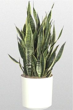 1000 id es sur le th me plante d 39 int rieur sur pinterest for Les plantes decoratives