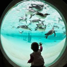 They only opened ZSL's Penguin Beach AFTER I left...sigh.