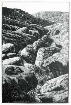 Charles Frederick Tunnicliffe (British, 1901-1979). Otter sleeping beside moorland stream. 1932. (wood engraving)