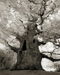 Woman photographs some of the world's oldest trees - stunning!