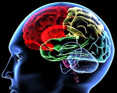 Build your intellectual asset << (M)BRAIN™ Technologies >> It will pay off in higher income for the rest of your life.