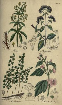 1838 - The British flora medica, or, History of the medicinal plants of Great Britain / by Benjamin H. Barton, and Thomas Castle.
