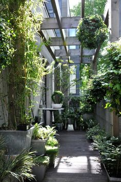 a green haven - shade patio decorating. love the hanging plants.