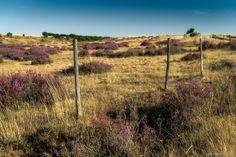 Entre alfombras de oro y púrpura ~ Fotografía Juanjo Mediavilla