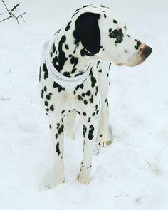 www.dogs-likes.com // WoOOF!!  *:) // #funnydogpictures, #perros, #typeso dogs, #catsanddogs, #dogtype,#dogbreeds, #kindsofdogs, #funnydogvideos, #mediumsizeddogs, #bestdogbreeds, #dangerousdogs, #whattypeofdogshouldiget, #dog, #dogs, #perros, #mascotas, #pets, #puppy, #puppies, #razasdeperrospequeños #chiens #hunde #犬 #собаки