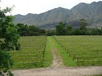 schiller-wine: Boekenhoutskloof – Producer of Sensational Premium Wines as well as Good Value Table Wines in Franschhoek