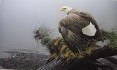 Robert Bateman Vantage Point Blad Eagle