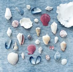 all the shells