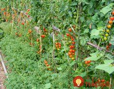 Nehovorí sa o nich príliš často, no mali by ste ich poznať. Tieto rastliny v záhrade vedľa seba rozhodne nevysádzajte, riskujete tak, že budete mať omnoho menšiu úrodu!