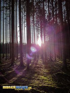 Licht im Wald – unweit des Paradiestals. Paradise, Tours, Hiking, Woods