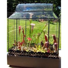 Spam, I figured out what to plant in my case! Hope it looks as good as this persons.