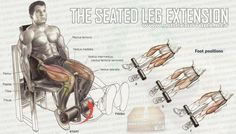 The Seated Leg Extension - Legs Workout Healthy Fitness Calves !