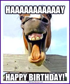 Caption and share the happy Birthday meme with the Funny Horse Face meme generator. Discover more hilarious images, upload your own image, or create a new meme. Funny Horse Face, Funny Horses, Funny Animals, Cute Animals, Animal Memes, Baby Animals, Smiling Animals, Animal Antics, Laughing Horse