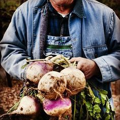 Blackberry Farm: Fresh turnips picked straight from our Garden heading to the kitchen! www.blackberryfarm.com