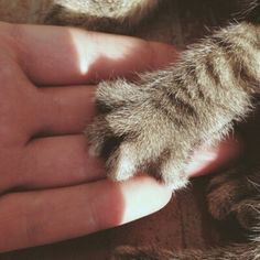 Hand and paw Cute Baby Animals, Animals And Pets, Funny Animals, Cat Paws, Dog Cat, I Love Cats, Cute Cats, Kittens Cutest, Cats And Kittens