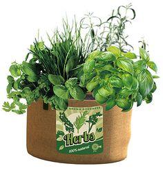 Herb Grow Bag